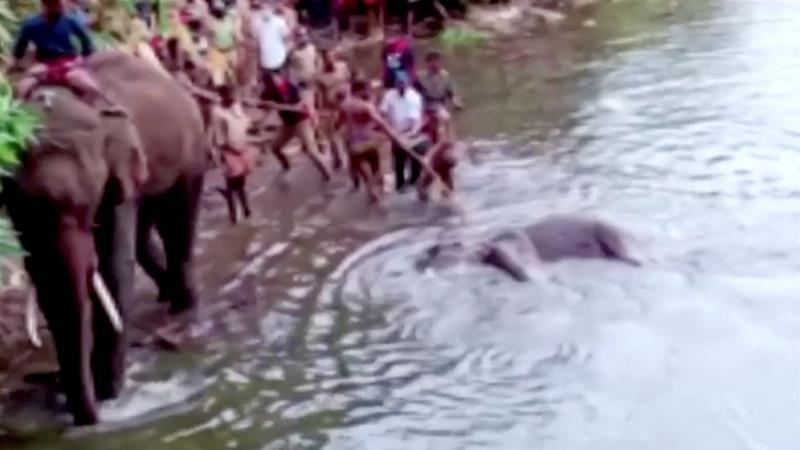 Man arrested in India's Kerala over death of pregnant elephant | News | Al Jazeera 1