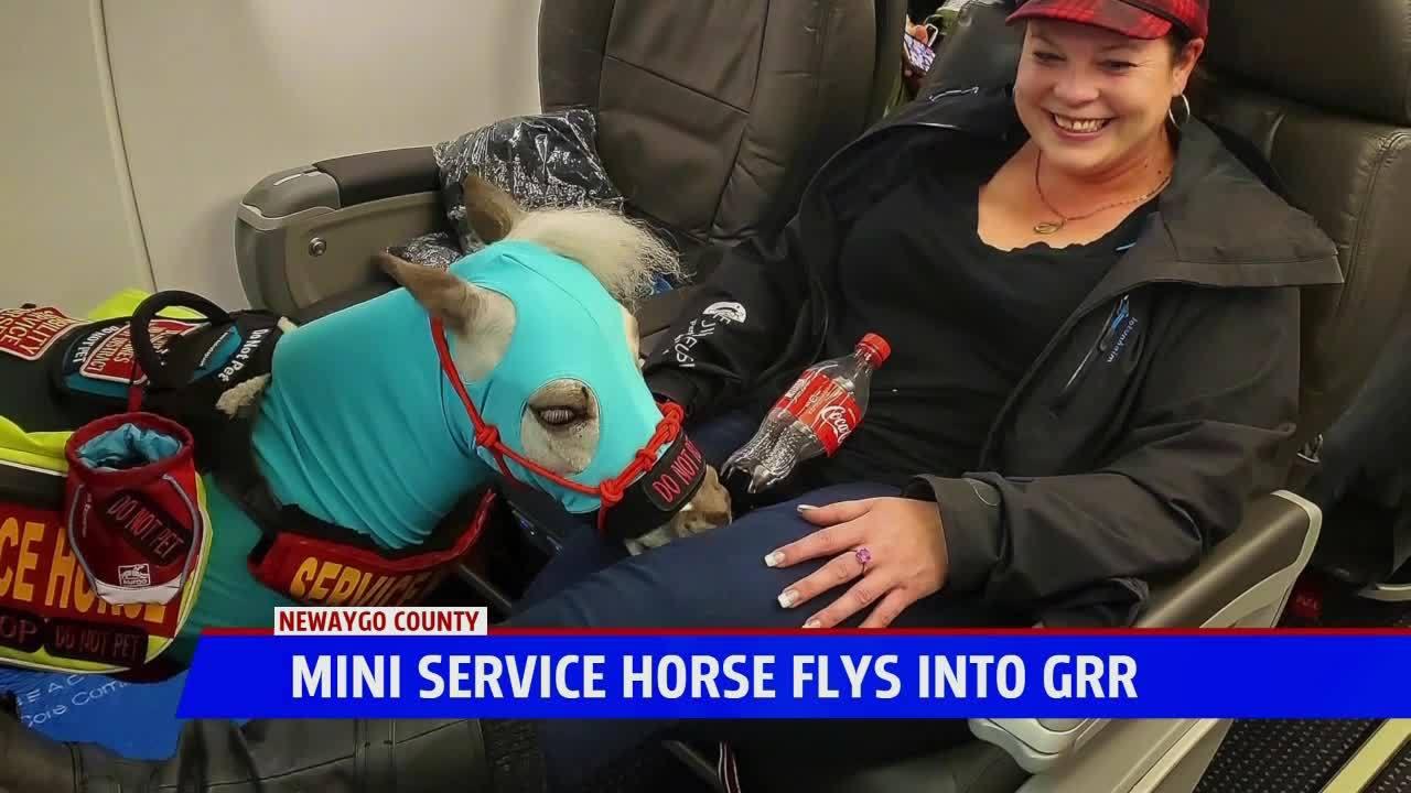 Michigan Trainer Brings Mini Service Horse on Flight, First Class No Less 3